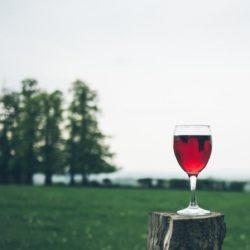 yoga wijn me factory emmen lifestyle opleidingen